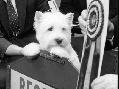 Best in Show,  Westminster Kennel Club